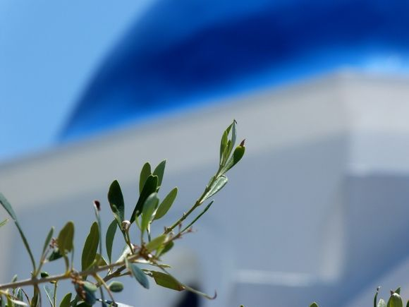 Blue dome and branch