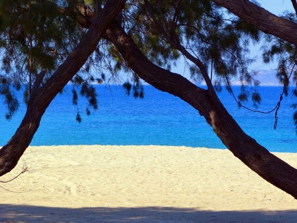 Sandy beach and trees