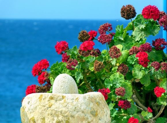 Flowers and sea