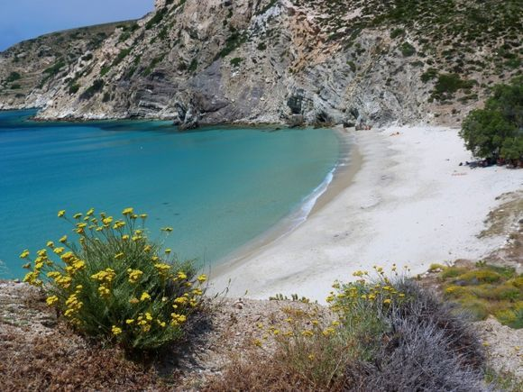 Yellow flowers on quiet Livadi beach