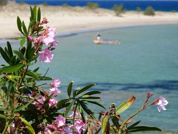 Beach and oleander