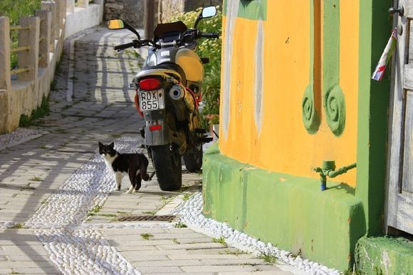 Cobbled alley with colorful facade and cat in Koskinou