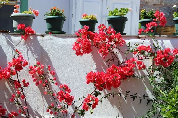 White wall with bougainvillea and pots of flowers, Hydra town