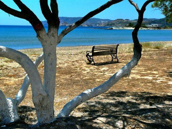 Bench and dry tree on Bonatsa beach