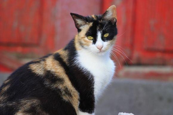 Cat, portrait, pets, outdoors