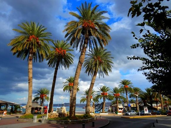 Colorful palm trees on the waterfront square