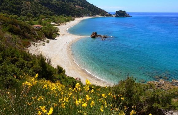 Beach with yellow broom