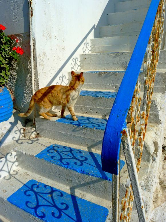 Cat on blue steps, Katapola