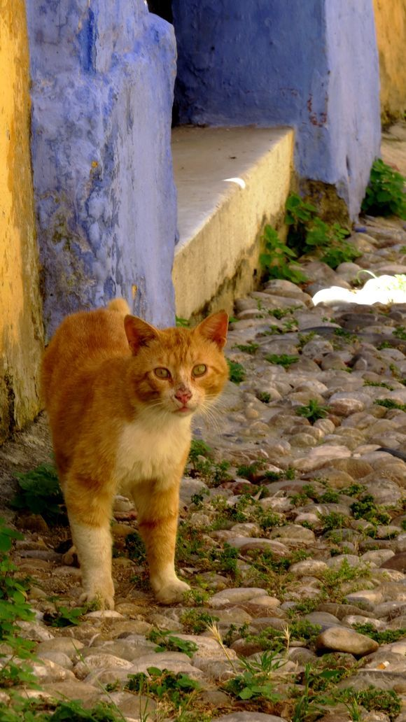 Cat, Rodos old town