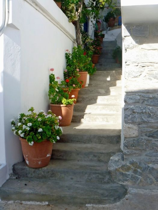 Steps & geraniums