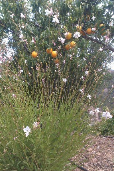 Flowers and Orange tree
