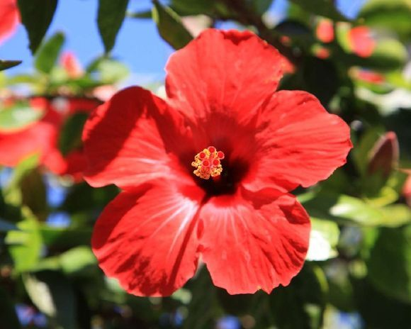Flower in the Old Town of Ierapetra