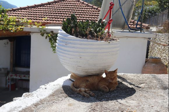 A very chilled cat