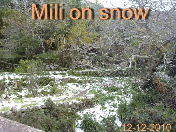Mili Gorge