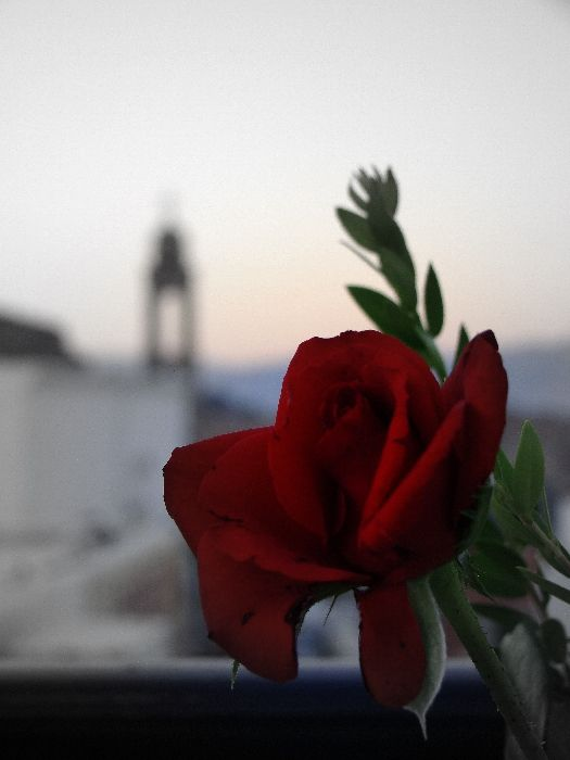 We had a romanitc dinner in Lindos on the most quaint roof-garden just infront of the acropolis of Lindos...this rose has had a long hot summer day :)
