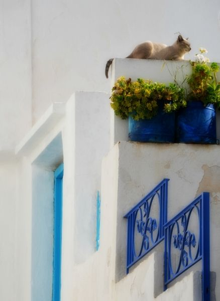 Enjoying the Greek sun