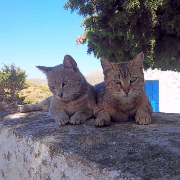 Sweet thoughts from Amorgos greeka!! (Tholaria village)