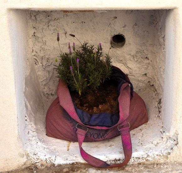 The lavender vase...in Iraklia