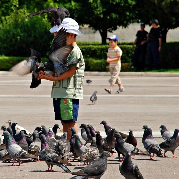 little boy surrounded by pigeons