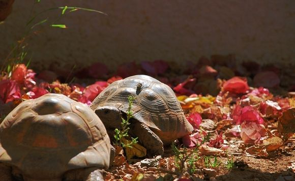 two turtles and a fly in the garden of a hotel in Karlovassi