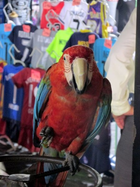 Parrot in one of the stalls in the Old Town