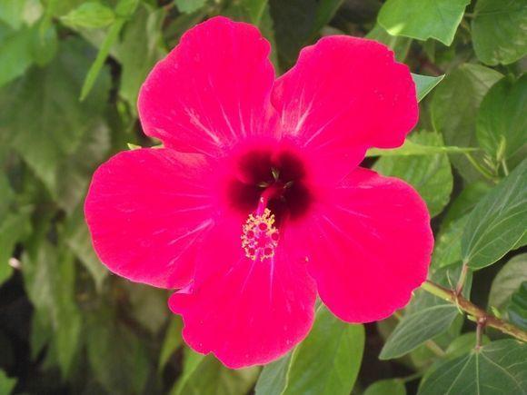 Floral Image - Rhodes