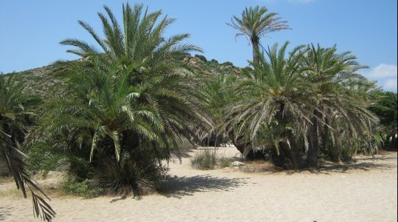 Crete Vai Palm Forest