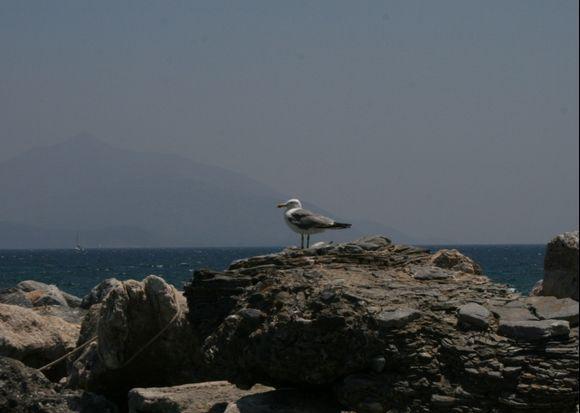 Posidonio harbour