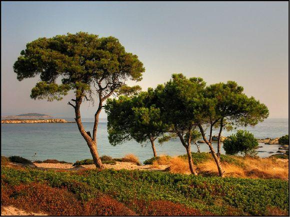 trees in the karidi beach