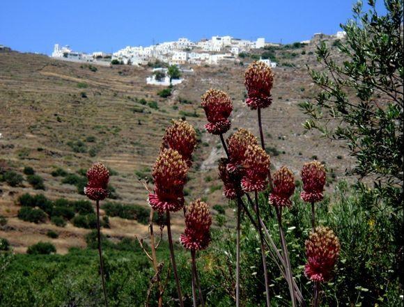 view through flowers to tholaria