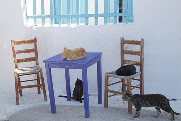Cats in Katapola.