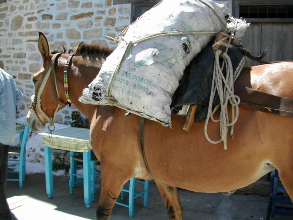 Alonissos, a donkey in the Chora