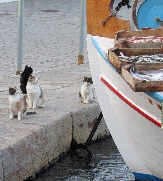 Hydra cats