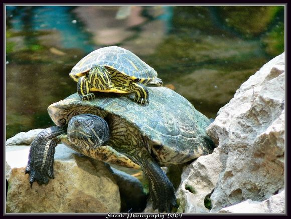 turtles in the park, Athens