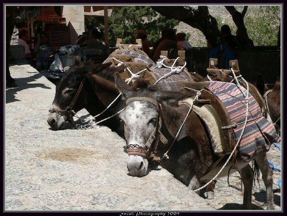 Donkeys in Lindos