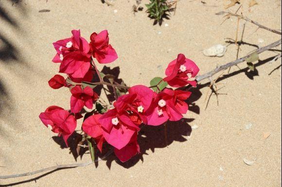 Beauty on sand .