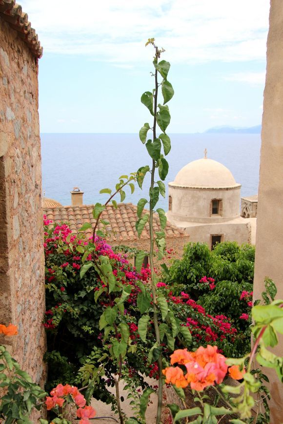 The flowers of Monemvasia #1