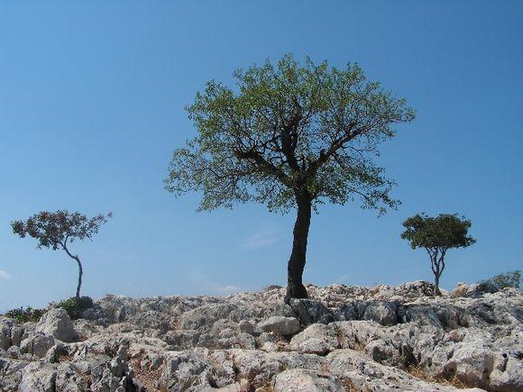 Mycenae- the triumph of the life.