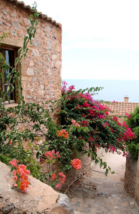 The flowers of Monemvasia #2