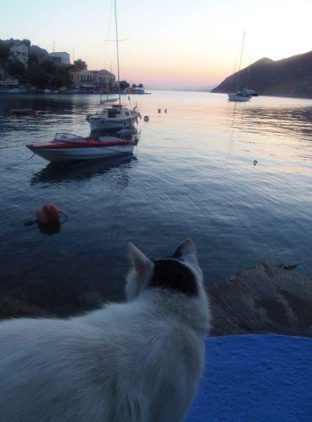 Sunrise Cat - Gialos Simi