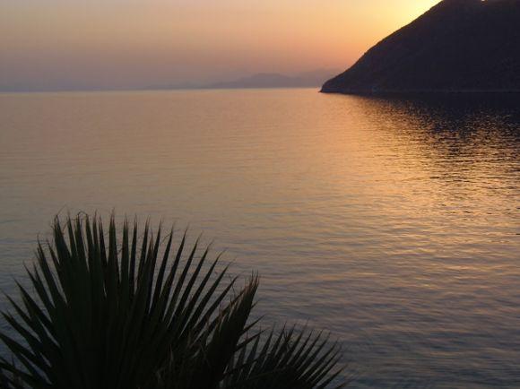 Palm Silhouette Sunrise - Gialos