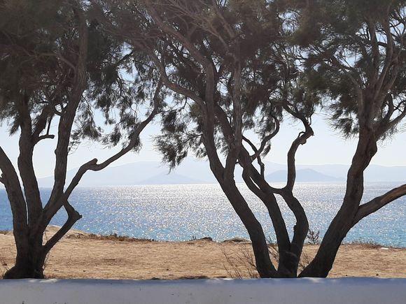 Trees at Agios Nikolaos Church