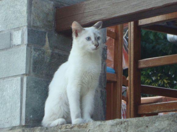 Thinking cat at Chora