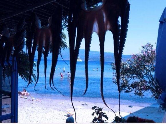 Octopus... Psili ammos beach... Samos