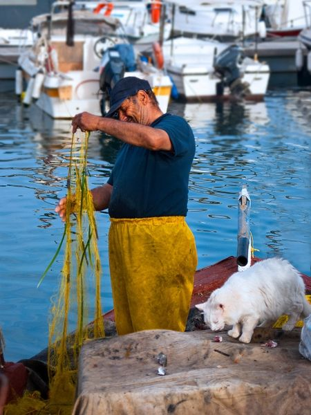 a fisherman feeding his cat that was waiting for him to return from his night fishing...