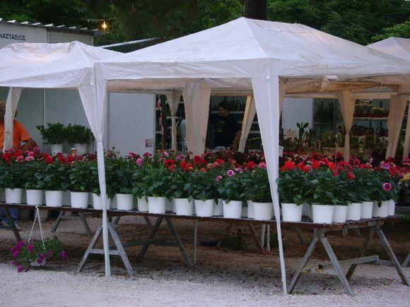 Kifisia flower exhibition
