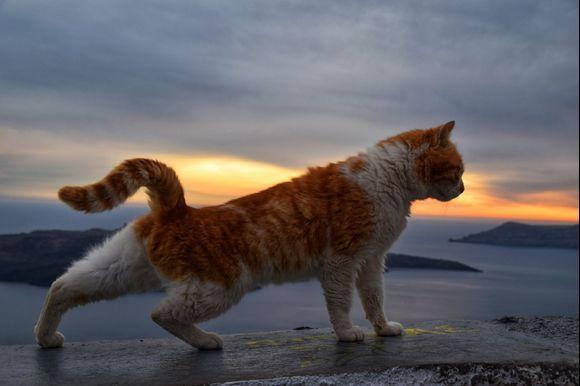 Cat 😻