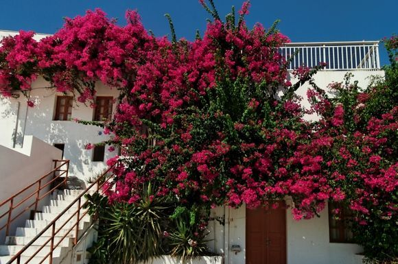 Lindos House and flowers