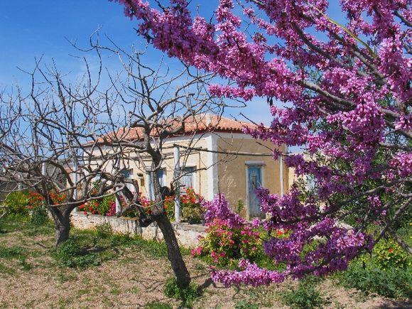 Spring on Aegina