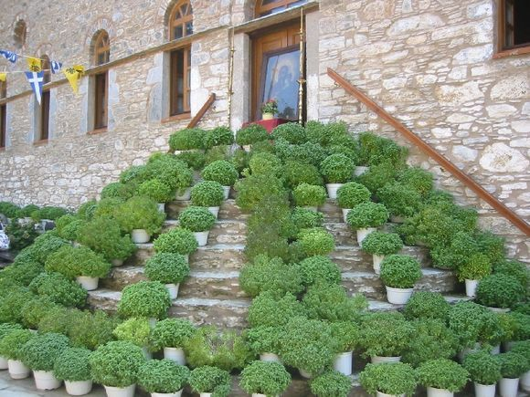 Evangelistria. Plants dedicated to old icon of church.